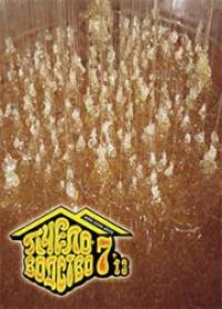 Пчеловодство 2013 № 7