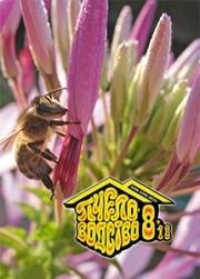 Пчеловодство 2018 № 8